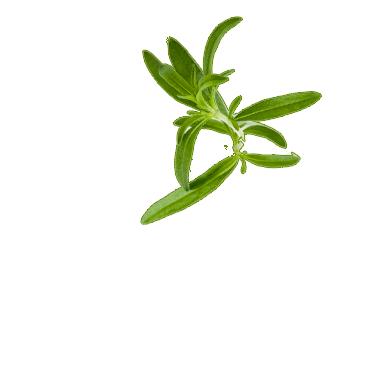 Herbspng