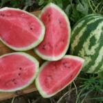 Watermelon - Crimson Sweet - Approx 10 Seeds